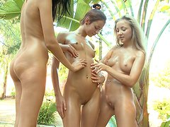 Trio of oiled up ladies with perfect bodies having massage therapy