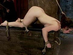 Serena Blair Getting Toyed while Bounded in BDSM Video