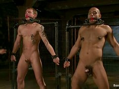 Cock Sucking and Butt Banging in BDSM Gay Group Sex