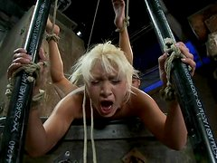 Hog tied Lea Lexis gets her wet pussy toyed rough